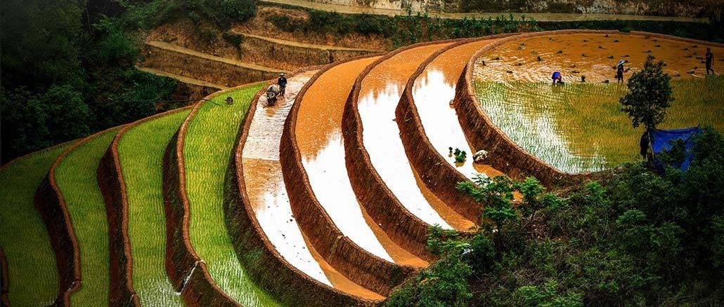 rizières en terrace